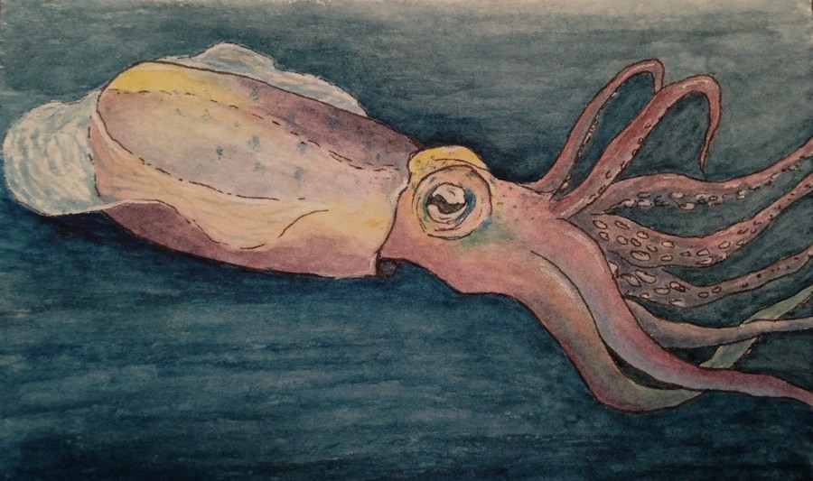 Squid Cropped