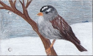 White-Crowned Sparrow Journal Page