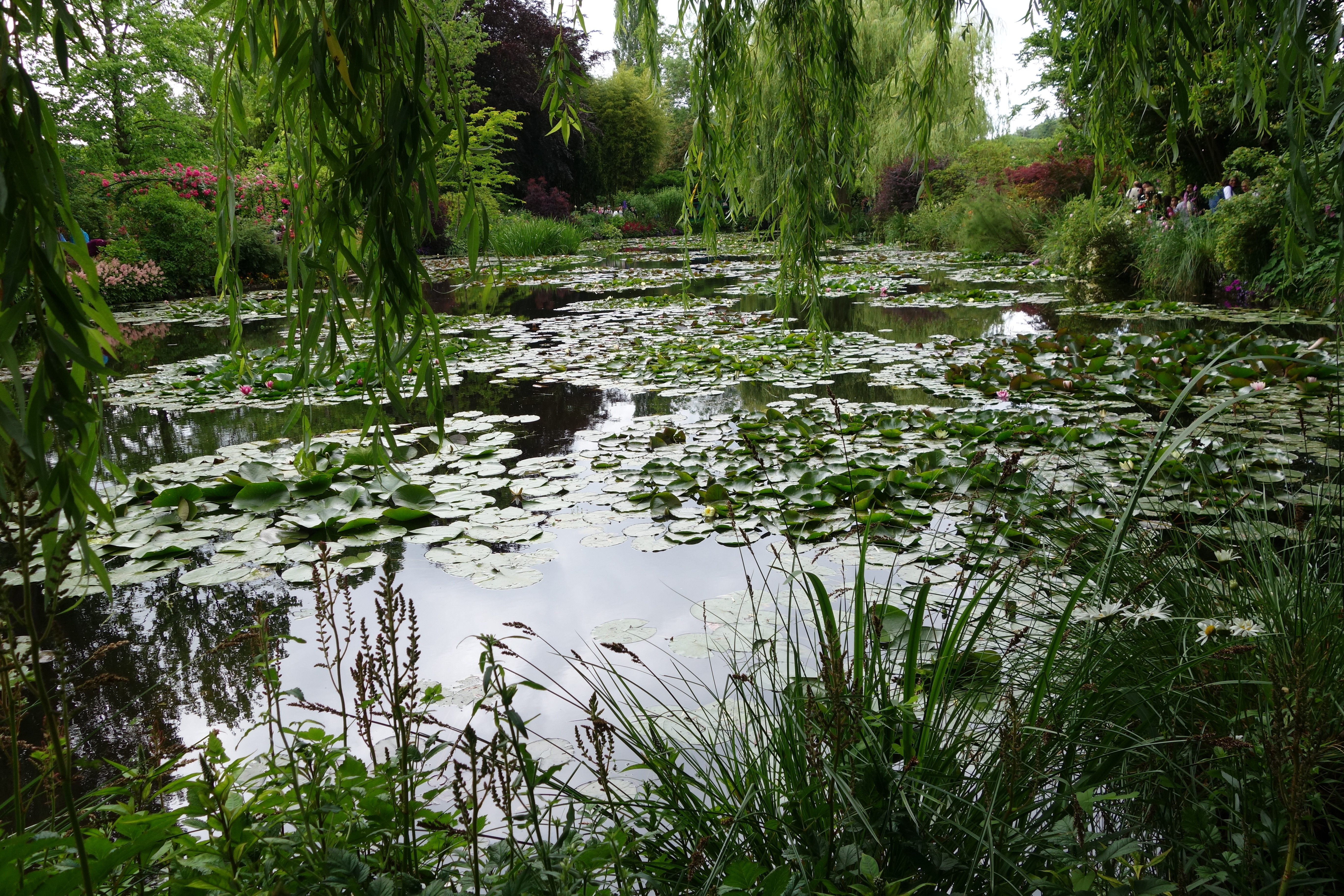 View of Monet's waterlily pond from under the willow tree