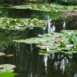 Waterlilies with reflection of weeping willows at Monet's gardens